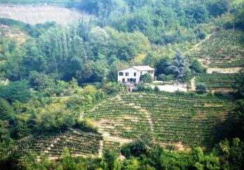 Merlini-vinmarker
